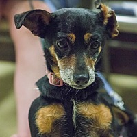 Adopt A Pet :: Lizzy - Grass Valley, CA