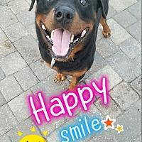 Adopt A Pet :: Rocky 4 - New Smyrna Beach, FL
