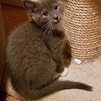 Adopt A Pet :: Twinkie - Lenhartsville, PA