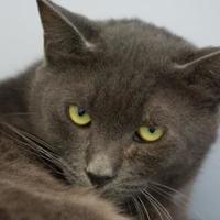 Adopt A Pet :: Mercury - Pendleton, OR
