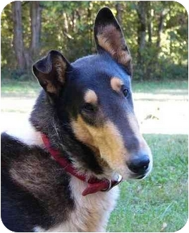 Collie Mix Dog for adoption in Mocksville, North Carolina - Static