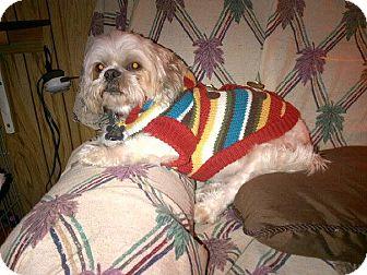 Shih Tzu Mix Dog for adoption in Freeport, New York - Poochy