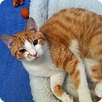 Adopt A Pet :: Suerte - Cranford/Rartian, NJ
