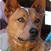 Adopt A Pet :: Curry - Siler City, NC