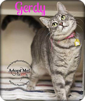 Domestic Shorthair Cat for adoption in Canyon Country, California - Gerdy