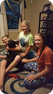 Labrador Retriever Mix Dog for adoption in Jacksonville, Florida - James Dean