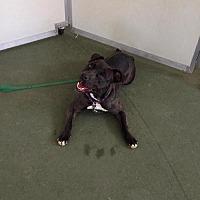 Adopt A Pet :: Mandi - Newfield, NJ