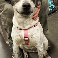 Adopt A Pet :: Bailey - Alexis, NC