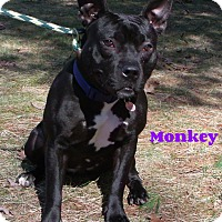 Adopt A Pet :: Monkey - Muskegon, MI