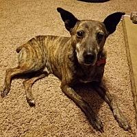 Adopt A Pet :: Dan - Fairmont, WV