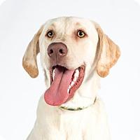 Adopt A Pet :: Gunnar - St. Louis Park, MN