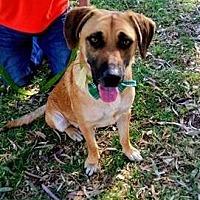 Adopt A Pet :: Sandor - San Diego, CA