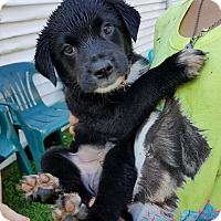 Adopt A Pet :: Sam - Garden City, MI