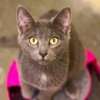 Adopt A Pet :: Star D - Independence, MO