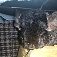 Adopt A Pet :: Nemo - Lindenhurst, NY