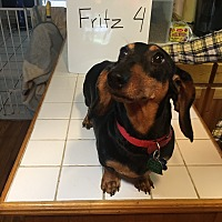 Adopt A Pet :: Fritz S. (Adoption Pending) - Marcellus, MI