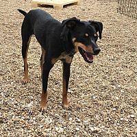 Adopt A Pet :: Diesel - Wyanet, IL