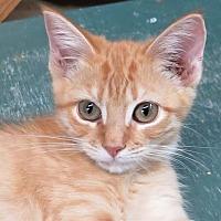 Adopt A Pet :: Rachele - Gonzales, TX