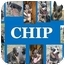 Photo 1 - Australian Cattle Dog/Australian Cattle Dog Mix Dog for adoption in Shenandoah, Iowa - Chip