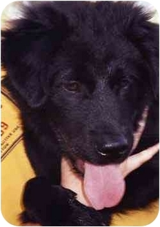 Labrador Retriever Mix Dog for adoption in Owatonna, Minnesota - Vinny