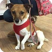 Adopt A Pet :: Annie - Hilliard, OH