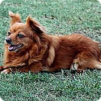 Adopt A Pet :: Rose - Lodi, CA