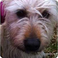 Adopt A Pet :: Dublin - Windham, NH