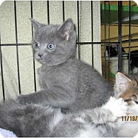 Adopt A Pet :: Scooter - Catasauqua, PA