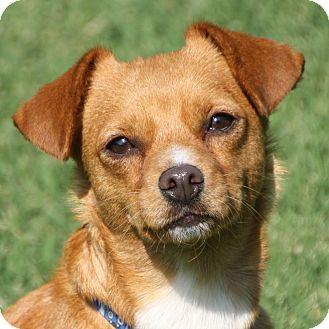 Dachshund/Terrier (Unknown Type, Small) Mix Dog for adoption in Edmonton, Alberta - Freeway