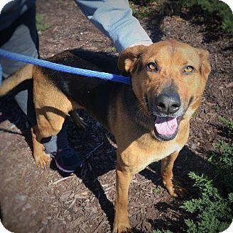 German Shepherd Dog Mix Dog for adoption in Wilmington, North Carolina - Samantha