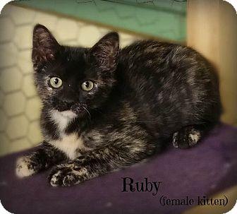 Calico Kitten for adoption in Glen Mills, Pennsylvania - Ruby