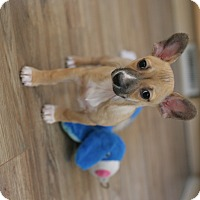 Adopt A Pet :: Peyton- adoption pending - Greeley, CO