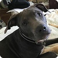 Adopt A Pet :: Booker - Sunnyvale, CA