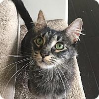 Adopt A Pet :: Jolene - LaGrange Park, IL