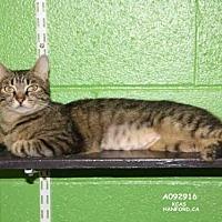 Adopt A Pet :: ALEX - Hanford, CA