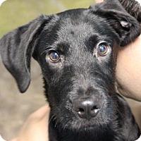 Adopt A Pet :: Phil - Pompton Lakes, NJ