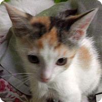 Adopt A Pet :: Chela - LaJolla, CA