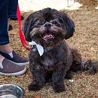 Adopt A Pet :: Oliver - Fullerton, CA