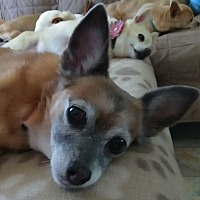 Adopt A Pet :: Bella - Creston, CA