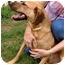 Photo 4 - Hound (Unknown Type) Mix Dog for adoption in Inman, South Carolina - Bentley