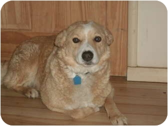 Border Collie Mix Dog for adoption in San Pablo, California - Lucas