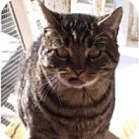 Adopt A Pet :: Romeo - El Cajon, CA