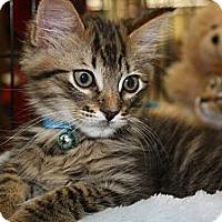 Adopt A Pet :: Koda - Vero Beach, FL
