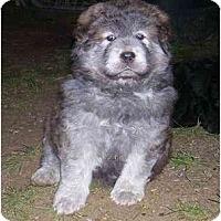 Adopt A Pet :: Tye - Chandler, IN