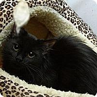 Adopt A Pet :: Melrose Park - Lombard, IL