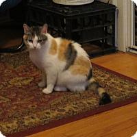 Adopt A Pet :: Miriam - Chicago, IL