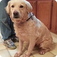 Adopt A Pet :: Riley Ann - St Louis, MO