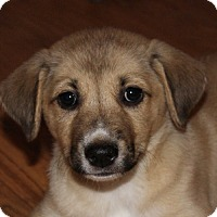 Adopt A Pet :: Belle - PENDING - in Maine - kennebunkport, ME