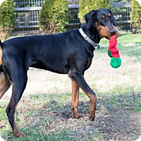 Adopt A Pet :: HERZ - Greensboro, NC