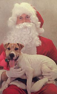 Shar Pei/Australian Shepherd Mix Dog for adoption in Lexington, Kentucky - Phoebe